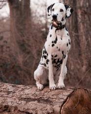 dog-3386009