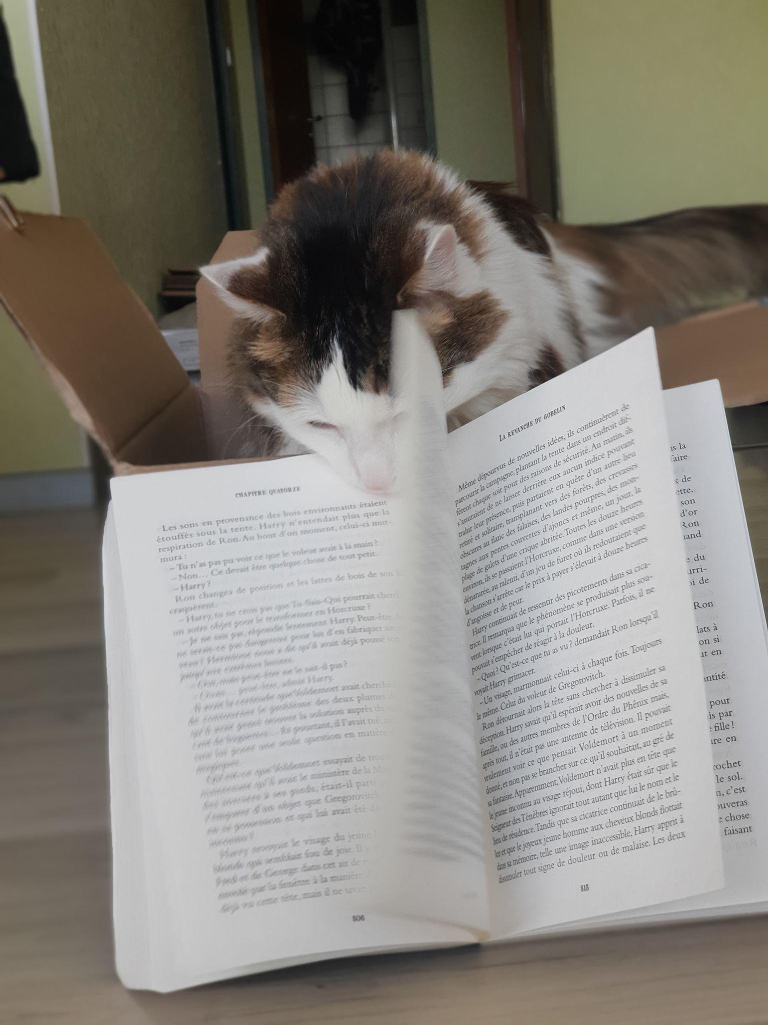 chat livre.jpg