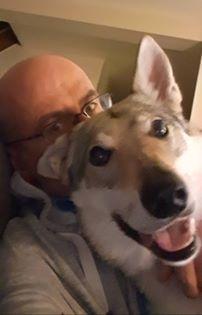 chien-loup tchécoslovaque heureux