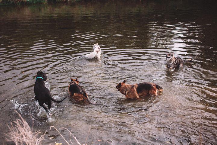 chiens baignade eau