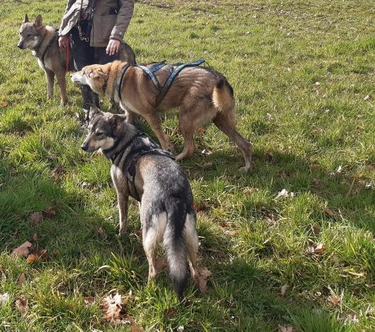 randonnée canine socia chien haut-rhin
