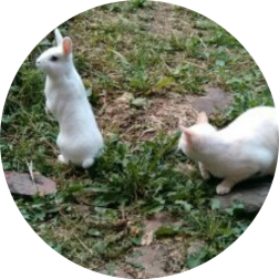 jeu chat et lapin comportement haut-rhin
