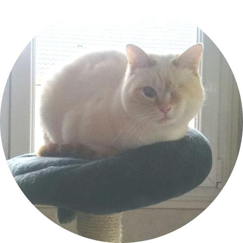 chat adopté haut-rhin