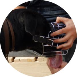 muselière chien education positive