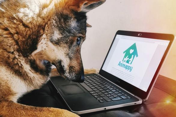 chien vidéo ordinateur